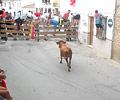 Bull Running - August Fiesta